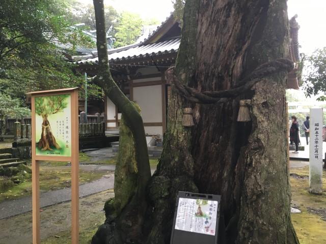 kimetsu-shrine-oita-beppu-2